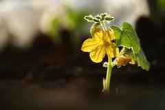 dziecko roślinnych Fotografia Stock