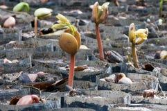 Dziecko rośliny wiązka Obrazy Stock