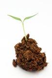 dziecko roślinnych Zdjęcie Royalty Free