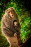 dziecko rodzinny przygotowywa jej makaka małpy matki Zdjęcia Stock