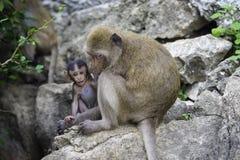 dziecko rodzinny przygotowywa jej makaka małpy matki Zdjęcie Royalty Free