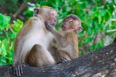 dziecko rodzinny przygotowywa jej makaka małpy matki Fotografia Royalty Free