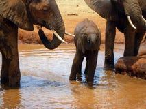 Dziecko słoń Obrazy Royalty Free