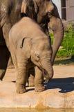 Dziecko słoń zdjęcie royalty free
