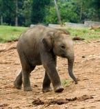 dziecko słoń obraz stock