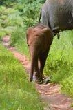 Dziecko słoń bawić się w piasku Obraz Royalty Free