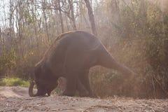 Dziecko słoń cieszy się życie obrazy royalty free