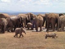 Dziecko słoń i oddziału jastrząb obraz royalty free