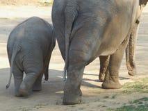 Dziecko słoń z jej matką Zdjęcia Stock