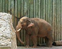 dziecko słoni Obraz Royalty Free