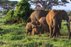 Dziecko słoni sztuka Amboseli, Kenja Zdjęcie Stock