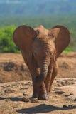 dziecko słonia Zdjęcia Stock