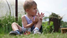 Dziecko siedzi na gazonie i je czerwone jagody ogrodowe jagody Wiktoria zdjęcie wideo