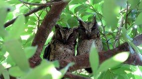 Dziecko sowa w drzewie fotografia royalty free