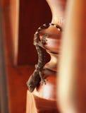 Dziecko Tokajski gekon w hotelu Zdjęcie Royalty Free