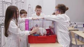 Dziecko w wieku szkolnym chwyta królik w zajęcia z biologii zbiory wideo