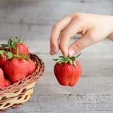 Dziecko wziąć jeden dojrzałej truskawki od łozinowego kosza Mały dziecko trzyma truskawki w ręce Zdrowa owoc dla dzieci Obraz Royalty Free