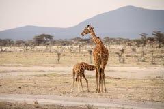 Dziecko żyrafa Zdjęcia Royalty Free