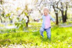 Dziecko z czereśniowego okwitnięcia kwiatem chłopcy tła Wielkanoc jajka miłych jaj trawy zielone świeżego ukryte hunt wyizolował  Zdjęcie Stock