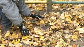Dziecko zbiera twój ręki jesieni żółtego ulistnienie zbiory wideo