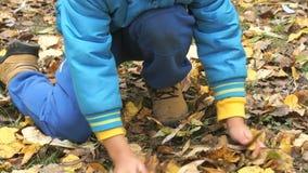 Dziecko zbiera twój ręki jesieni żółtego ulistnienie zbiory