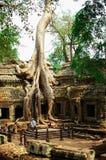 Dziedzictwa miejsce w Angkor Wat, Kambodża Zdjęcie Royalty Free