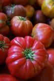 dziedzictwo pomidor Zdjęcie Royalty Free