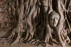 dziejowy ayutthaya park Zdjęcie Stock