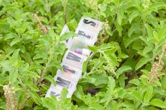 Dzienny pigułki pudełko na roślinie fotografia stock