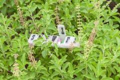 Dzienny pigułki pudełko na roślinie zdjęcie royalty free
