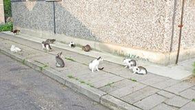 Dziesięć kotów w jeden miejscu Fotografia Stock