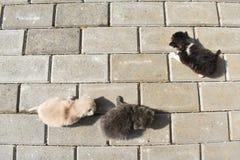 Dziesi?? dnia dziecka starych kot?w na bruku w podw?rzu zdjęcia stock