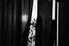 dziewczyn czarny kryjówki obsługują koszulowego fotografia biel s Zmierzch błyszczy przez okno Obraz Stock