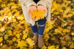 Dziewczyn otwarte ręki z żółtymi liśćmi Obrazy Royalty Free
