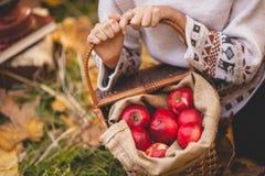 Dziewczyn ręki i czerwoni jabłka Zdjęcia Royalty Free