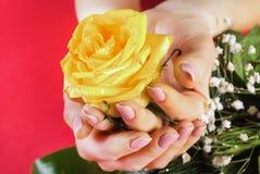 Dziewczyn ręki trzyma kolor żółty róży na czerwieni i zieleni tle obrazy royalty free