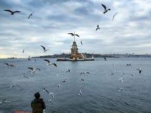 Dziewczyn seagulls i wierza Obrazy Royalty Free