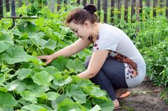 Dziewczyn spojrzenia przy ogródem z ogórkami Obraz Royalty Free