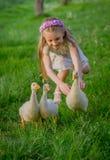 Dziewczyna łapie trzy kaczątka wśród trawy Zdjęcie Stock