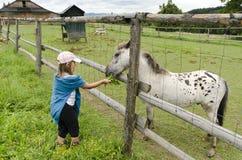dziewczyna żywieniowy koń Zdjęcie Stock