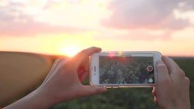 Dziewczyna agronom używa smartphone w rolnictwie Smartphone w położenia słońcu zbiory