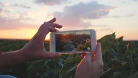 Dziewczyna agronom używa smartphone w rolnictwie Smartphone w położenia słońcu zdjęcie wideo