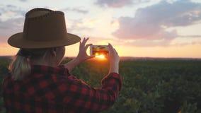 Dziewczyna agronom używa smartphone w rolnictwie Smartphone w położenia słońcu zbiory wideo