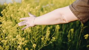 Dziewczyna aktywna i muskająca trawa cudowne piękne rośliny dobry humor wiosenne s?o?ce pi?kna kwiat wody zdjęcie wideo
