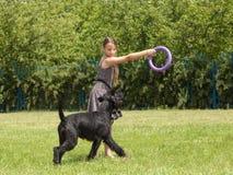 Dziewczyna bawić się z dużym psem Obraz Stock