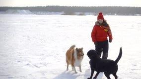 Dziewczyna bawić się z psami na zimy śnieżnym polu zdjęcie wideo