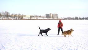 Dziewczyna bawić się z psami na zimy śnieżnym polu zbiory