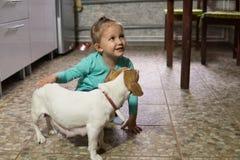 Dziewczyna bawić się z psem Jack Russell Obraz Stock