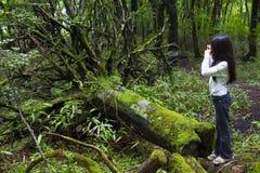 Dziewczyna Bierze Fotografię Drzewo Zdjęcie Stock
