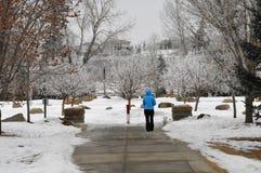 Dziewczyna chodzi psa w parku podczas zimnego zima dnia w Calgary, Kanada Fotografia Stock